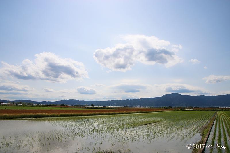青空広がる水田(琵琶湖周辺)