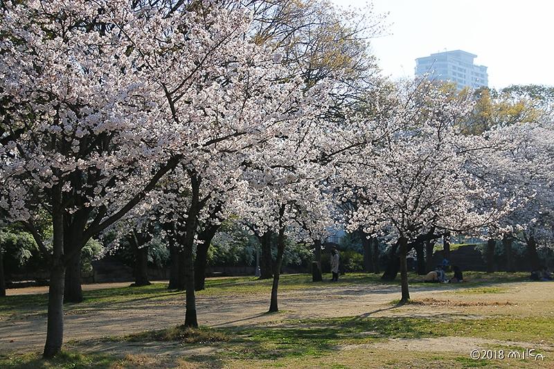 大阪城公園の桜の木々
