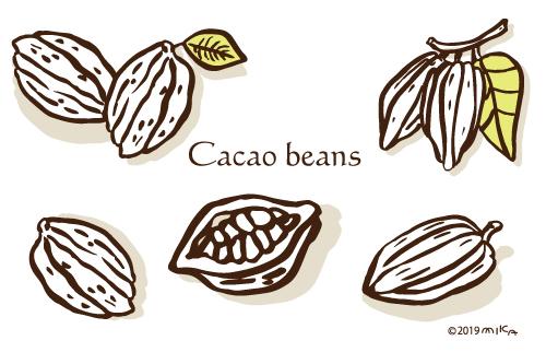 カカオ豆のイラスト