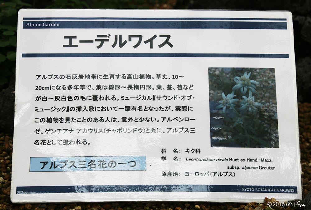 エーデルワイスの説明(京都府立植物園)