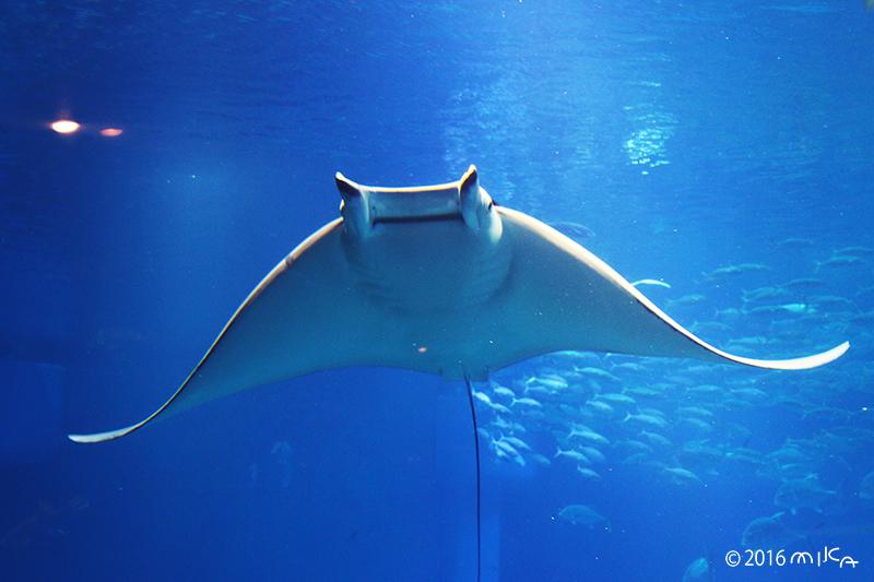海の生き物の写真