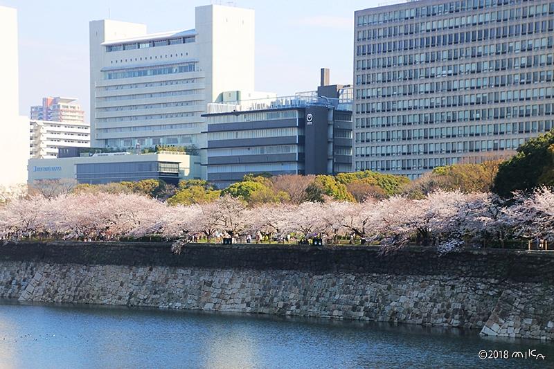 大阪城周辺の桜