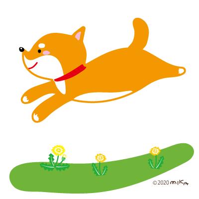 走る柴犬(左向き)
