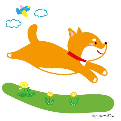 走る柴犬(右向き)