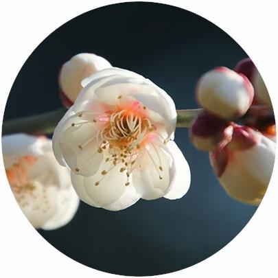 四季の花と実