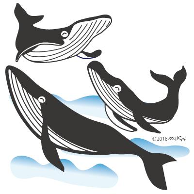 シロナガスクジラ3頭