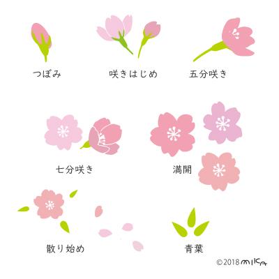桜のつぼみ・五分咲き・満開・散り始めなどのイラスト