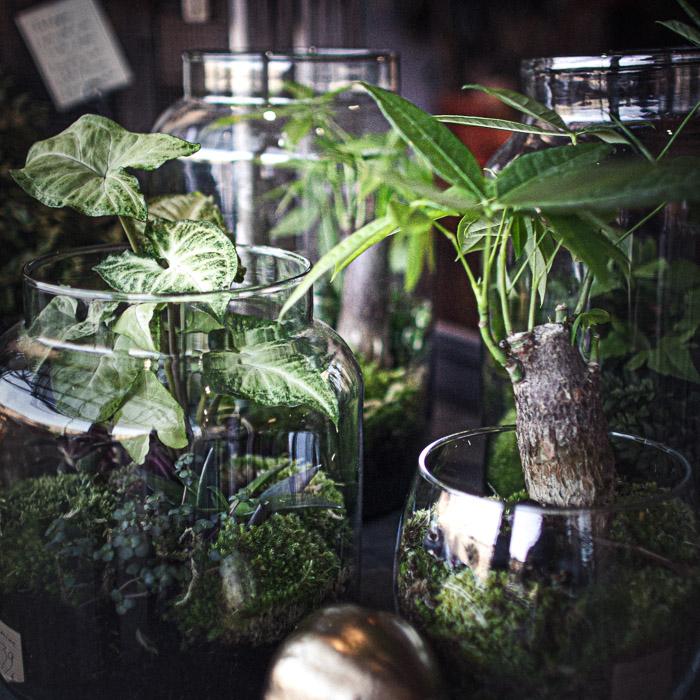 Les terrariums à partir de 45€