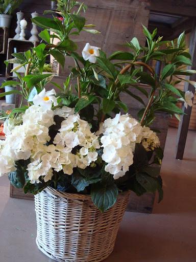 Panière de plantes à partir de 25€