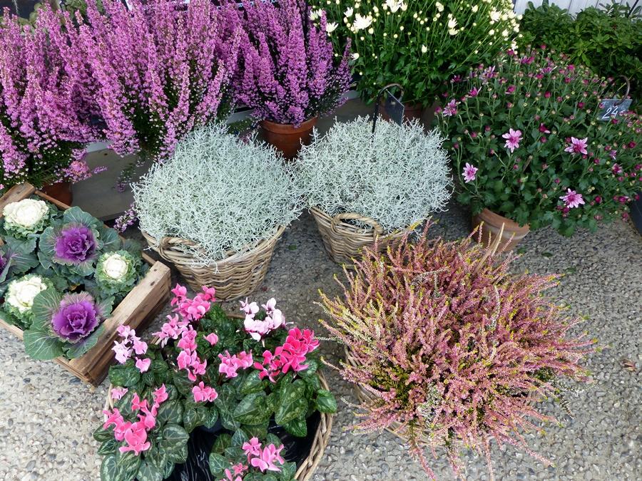 Les plantes pour l'extérieur