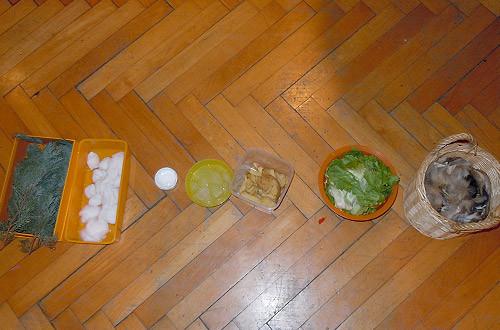 Es galt Zweige, nasse Watte, Creme, Eiswürfel, Kartoffelschalen, Salat und Fellstücke zu ertasten.