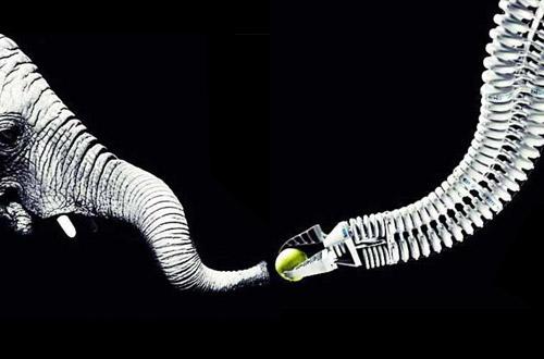 Bionik - Roboterarm durch Elefantenrüssel inspiriert