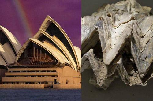 Architektur - Oper von Sydney durch Hahnenkammauster inspiriert