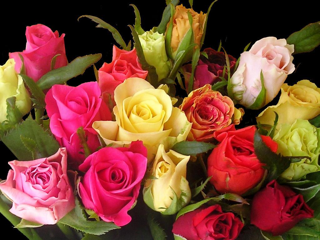 Спрей розы саженцы купить осень 2014 заказ букетов по москве недорого с доставкой круглосуточно