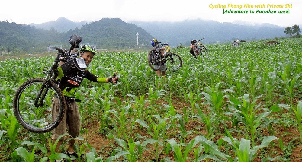 carrying bicycles over the corn fields