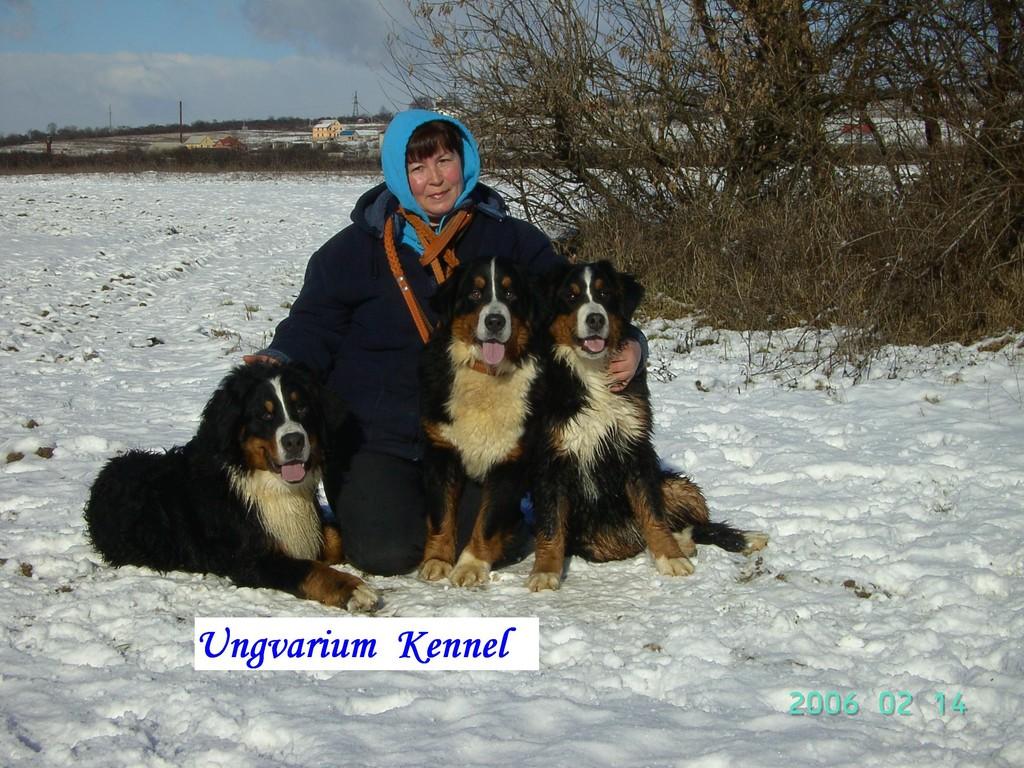 Кастор,Кенди и Голди