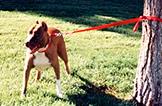 Enigma: El perro y la cuerda