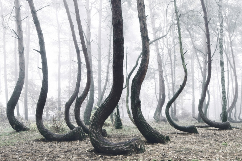 Bosque enganchado