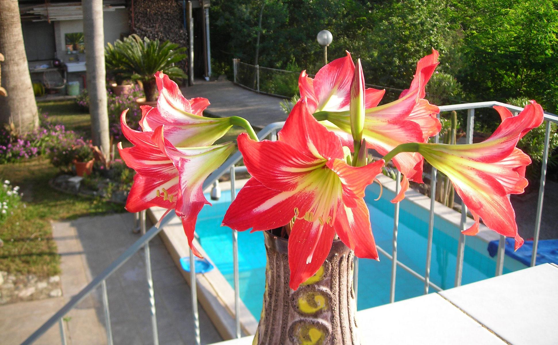 Pool mit Blume Detailansicht © Ferienwohnung Spilinga | Tropea | Kalabrien - Casa Belle Vacanze