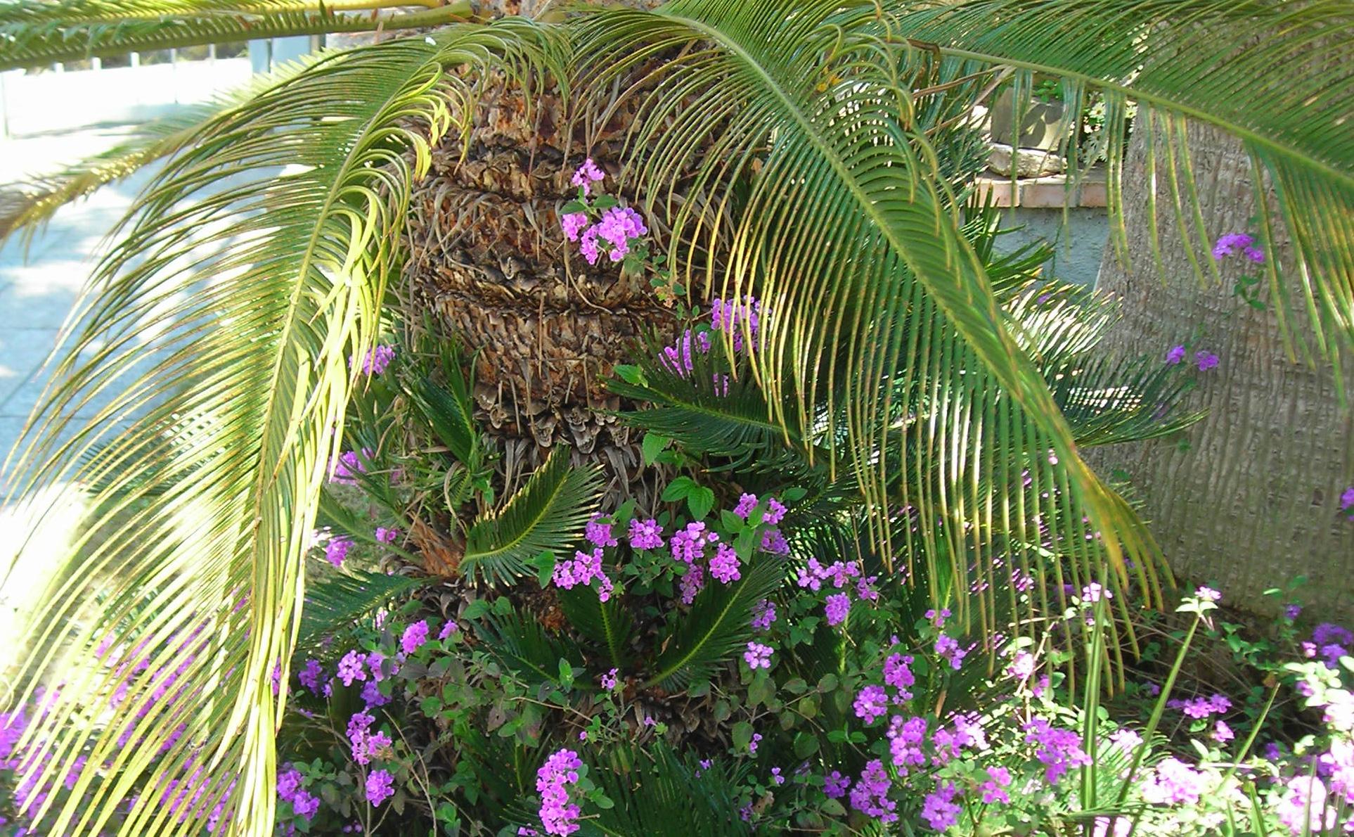 Palme im Garten mit Blume © Ferienwohnung Spilinga | Tropea | Kalabrien - Casa Belle Vacanze