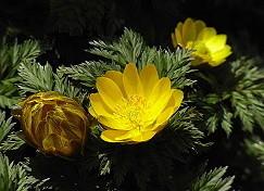 「季節の花 300」