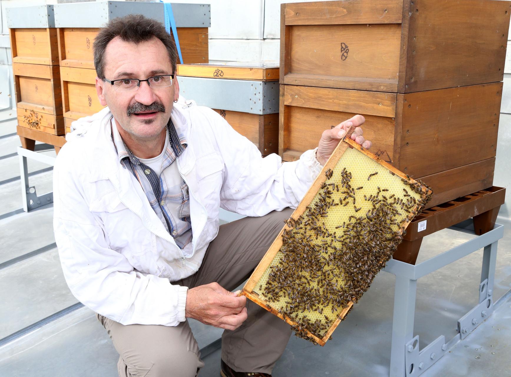 Bienen am Wiener Rathaus  (c) Votava
