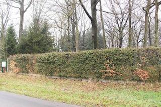 Beaucoup d'arbres à abattre