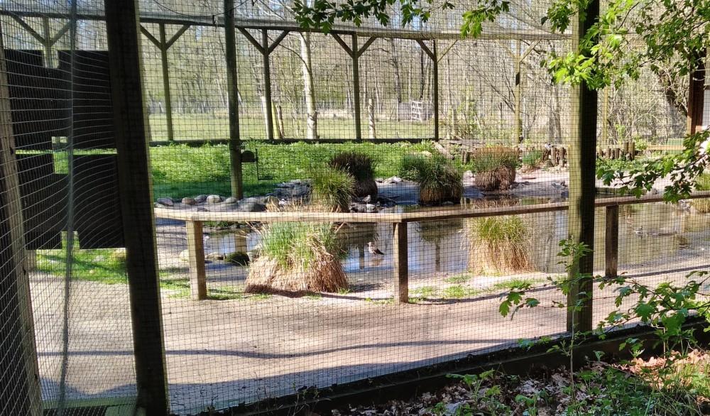 Die kleinen Gehege wie die Watvogelanlage sind geschlossen.