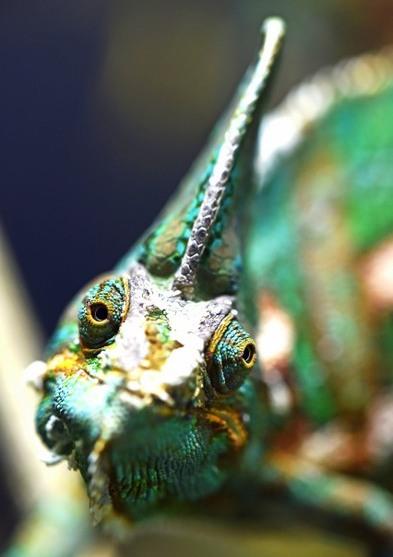 Erleuchtung betört wie das Farbenspiel eines Chamäleons