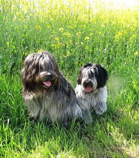 Bella rechts mit ihrem Weggefährten Asco