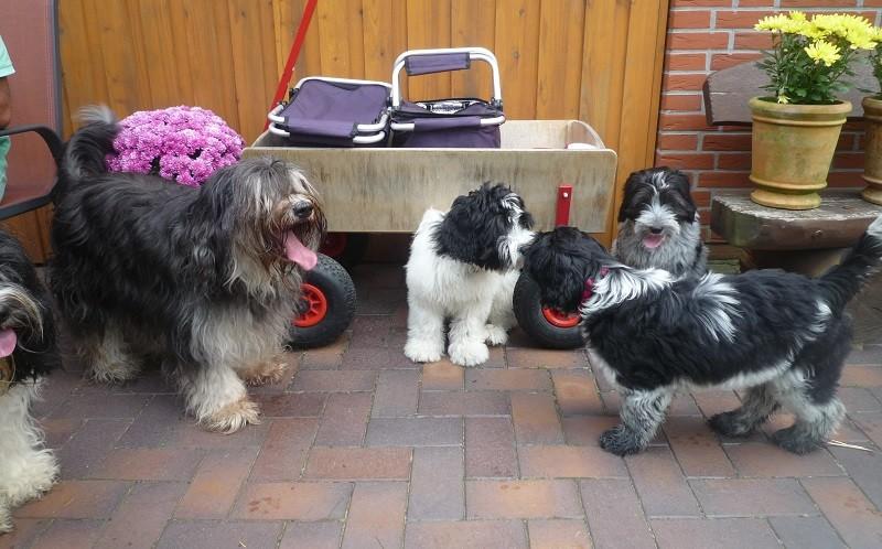 v.l.n.r- Ninja, Arthur, Anna und vorn Abby