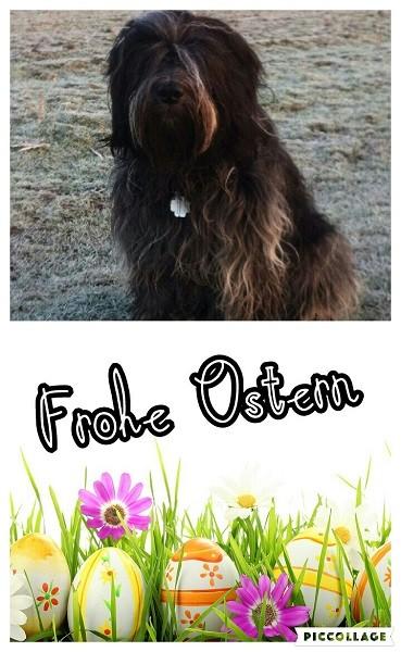 Arjen Oskar von Walsede aus unserem A- Wurf