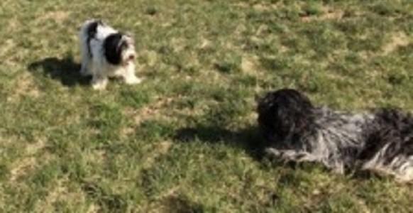 links Bessie, rechts Banba