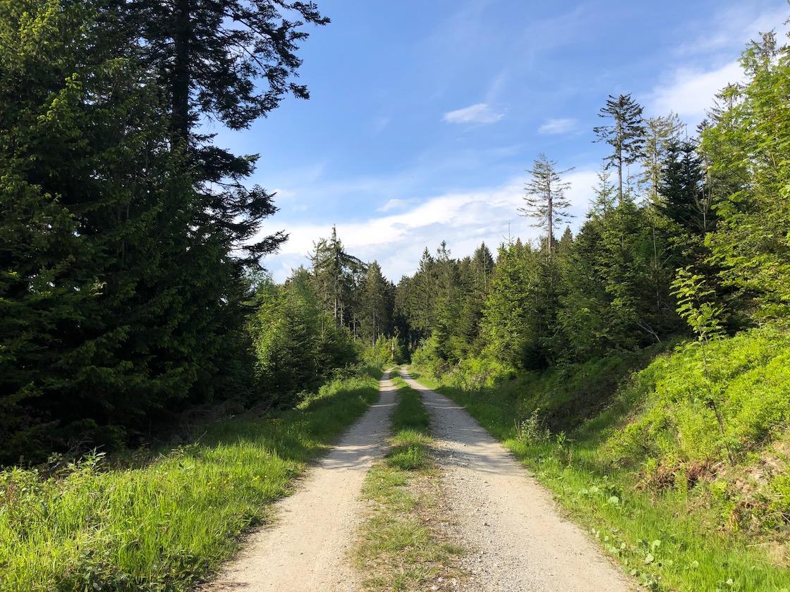 Abendstimmung im Bayerischen Wald