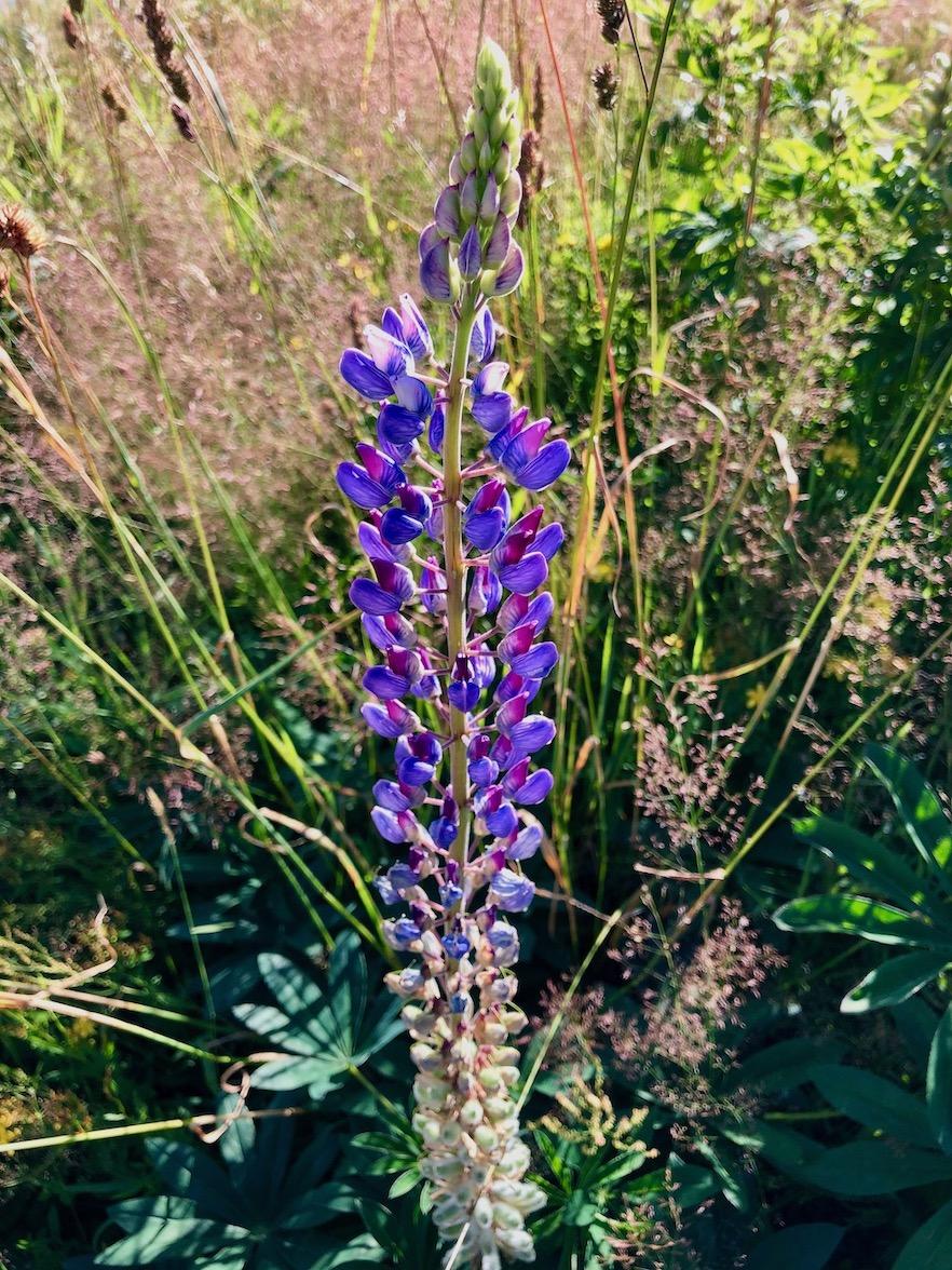Blumen im Nationalpark Bayerischer Wald