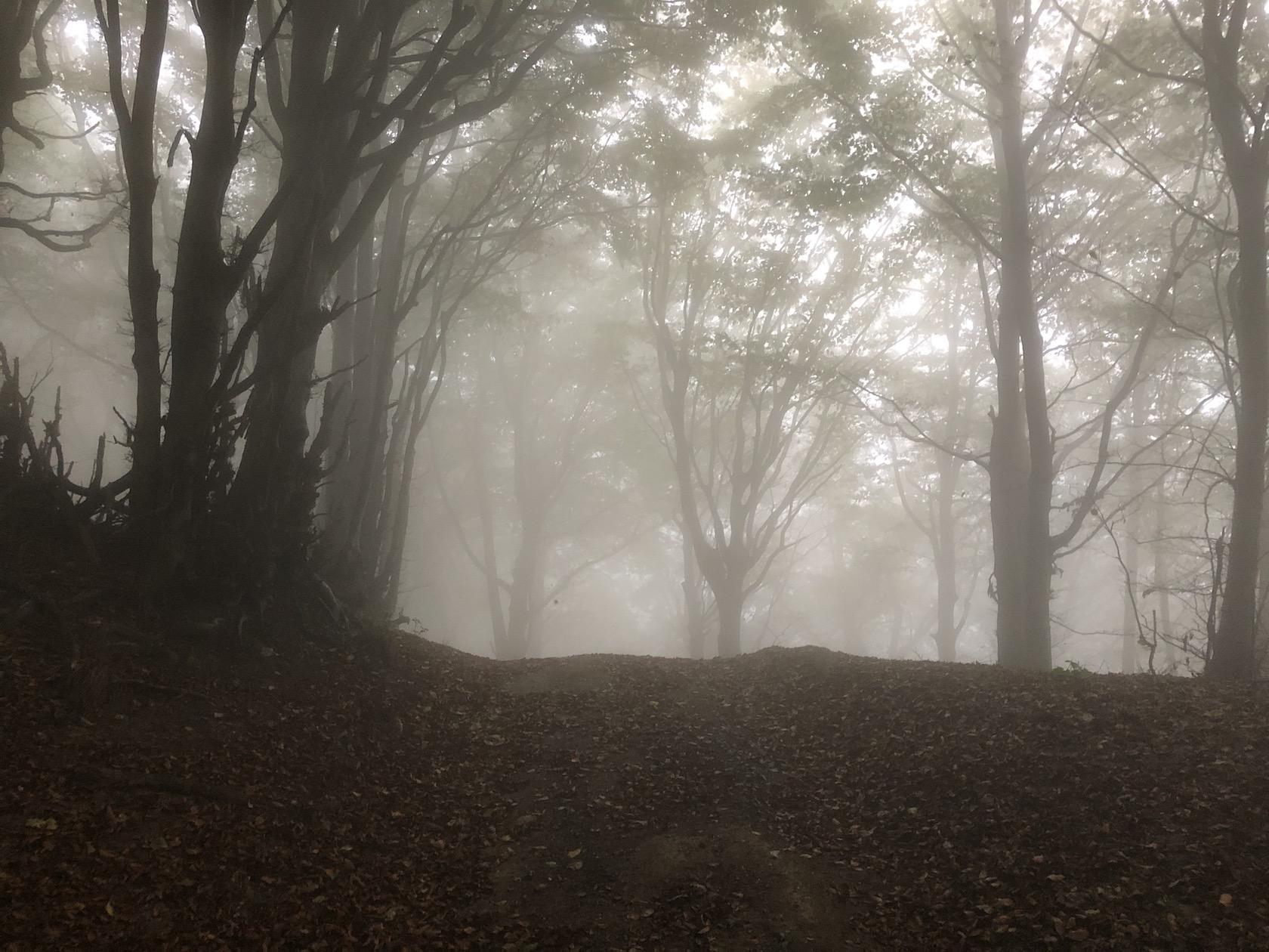 mystische Stimmung im Bergwald