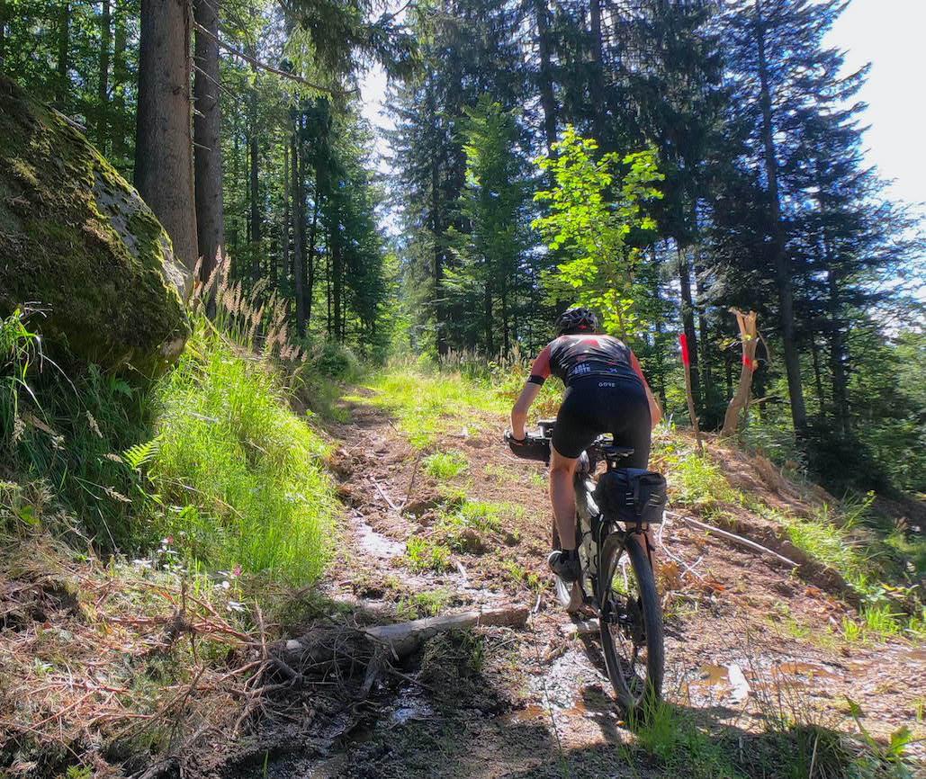 schöne Abfahrt im Wald vom Dreisessel