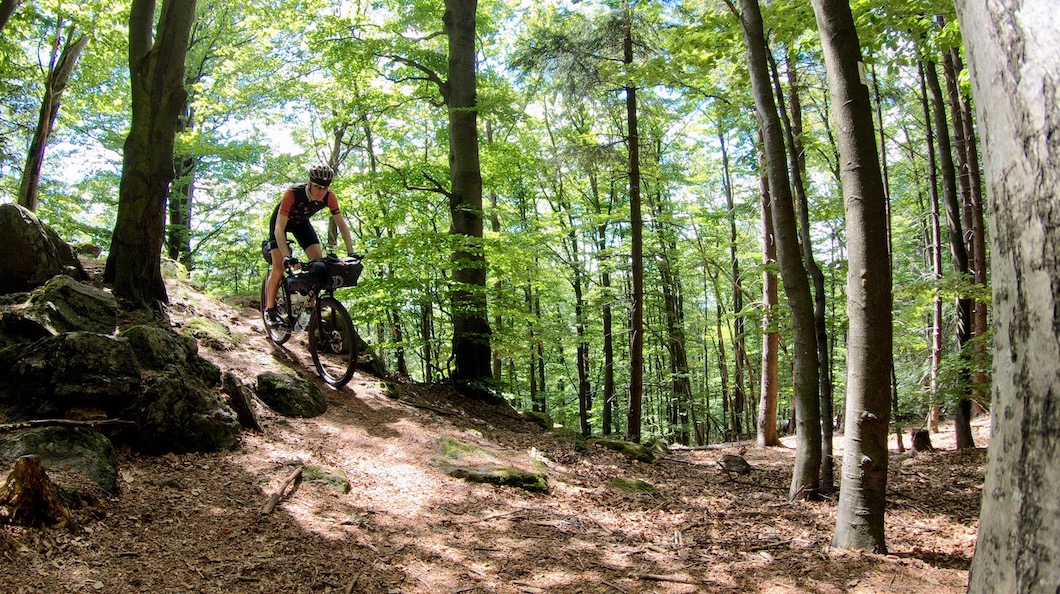 Berghuhn, Tannenriegel, Bayerischer Wald