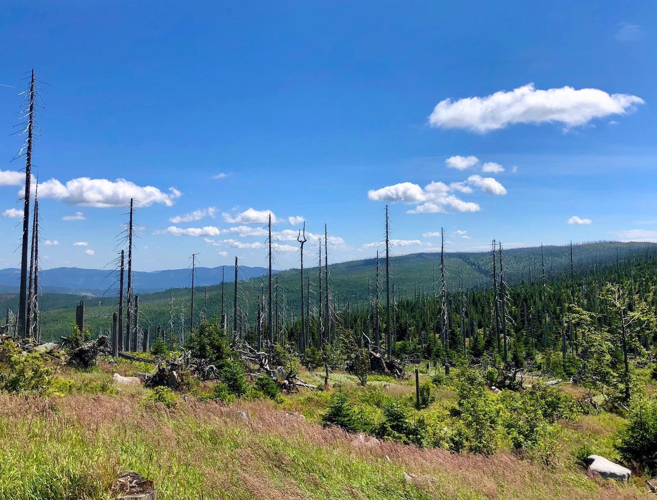 Baumgerippe im Bereich des Nationalparks entlang der Grenze