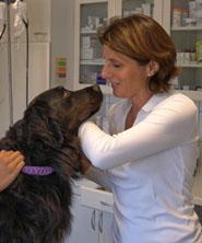 Parasiten beim Hund bekämpfen und vermeiden - die Gesundheit Ihres Tieres liegt uns am Herzen.