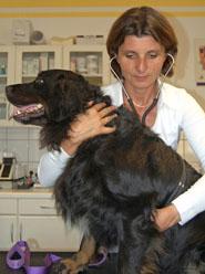 Herzspezialistin für Hunde und Katzen in Niederösterreich