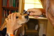 tierärztin für alle Hunderassen in der Nähe vom Bahnhof in Brunn am Gebirge