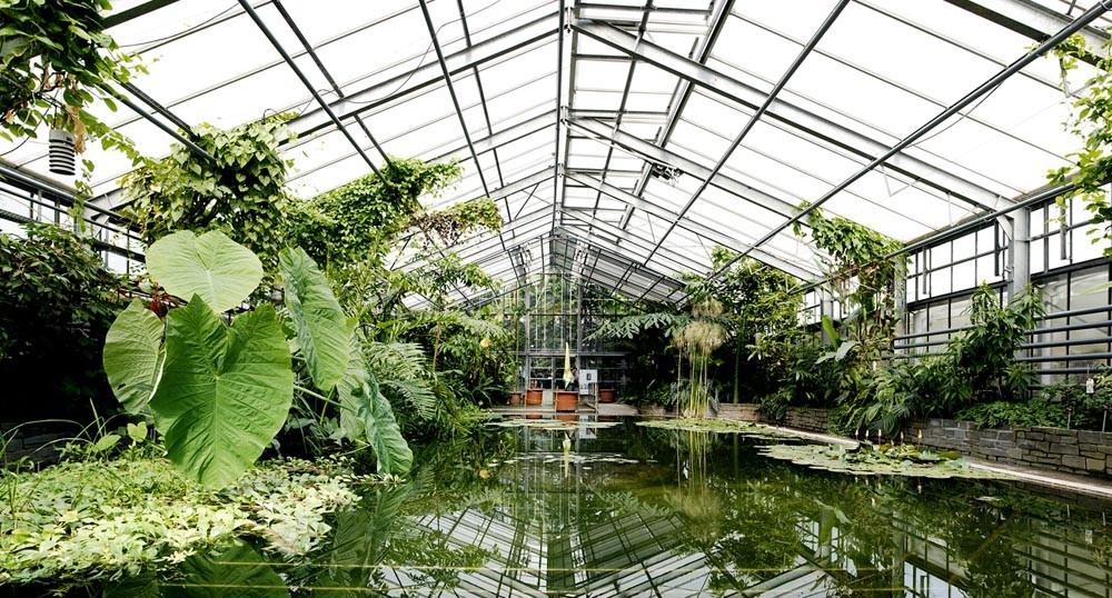 Botanischer Garten, Bonn