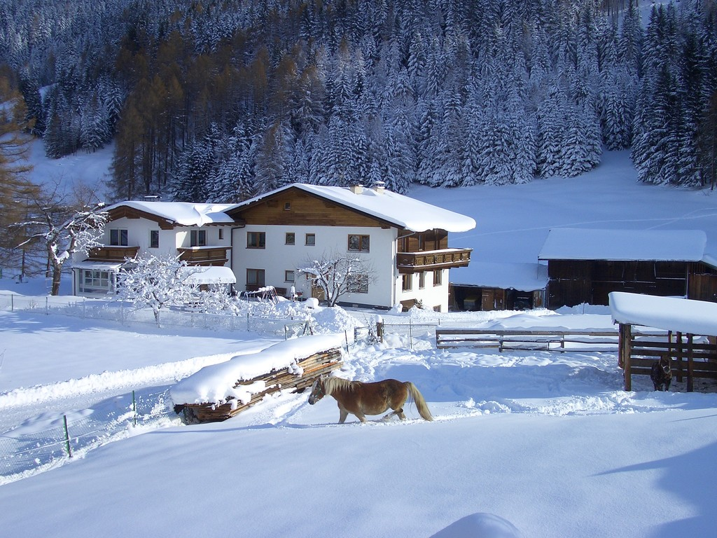 In unserem Stall stehen Schatz (Haflingerstute), Fuchs (Pony) und Rosa (Graukuh)