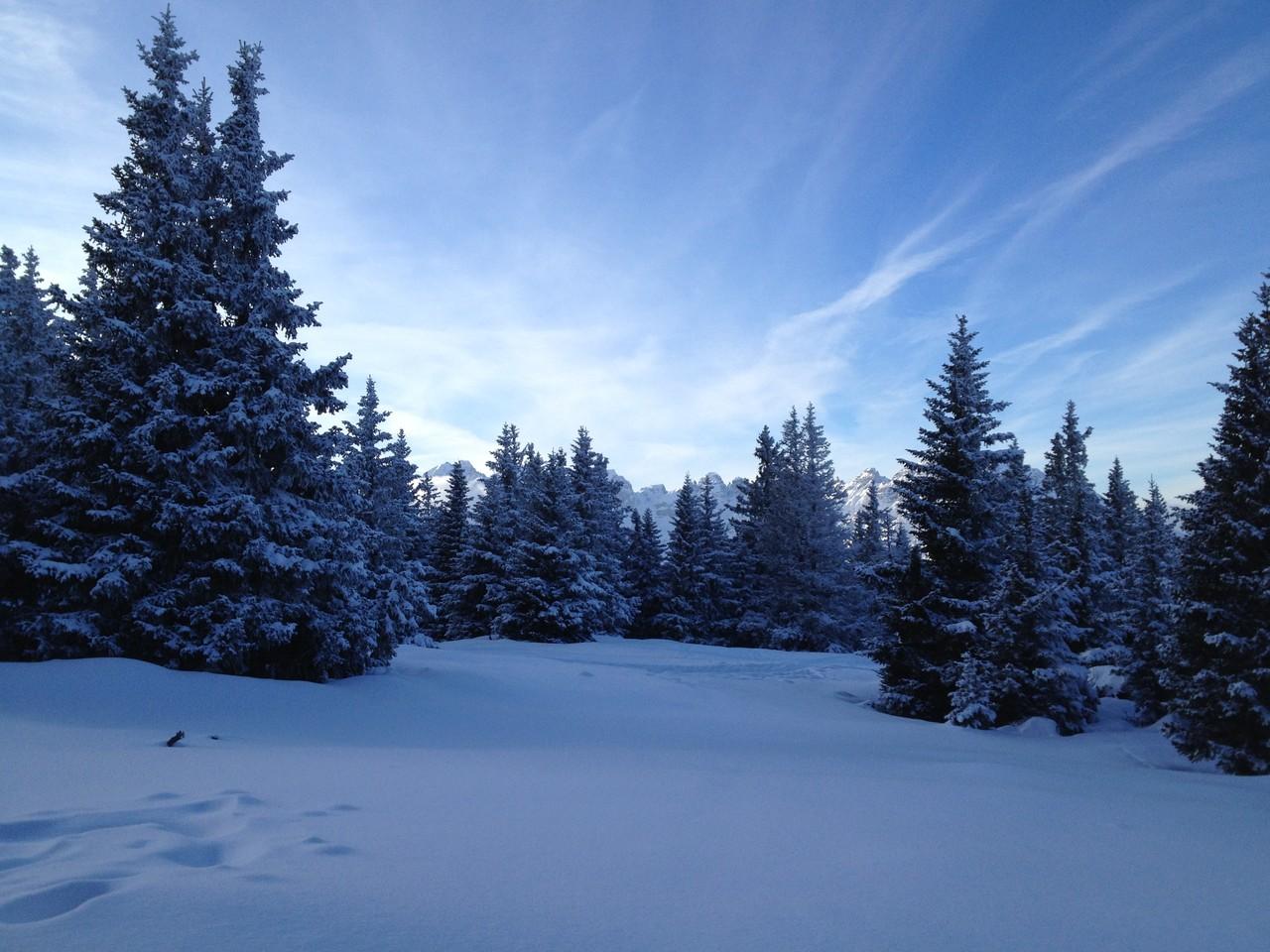 Miederer Wälder in Schnee verhüllt