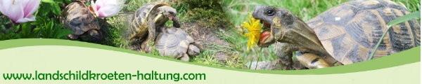 Schildkröten Banner