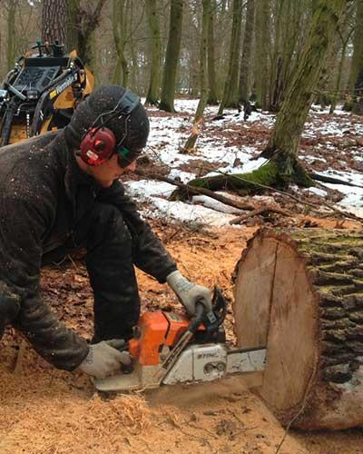 Baumpflege Rohrbeck - Mitarbeiter beim Baumsägen