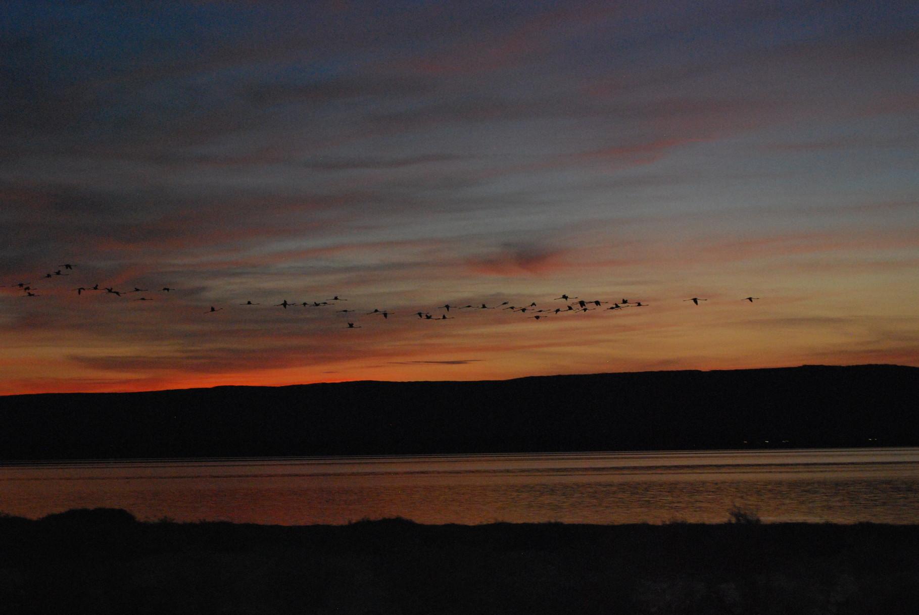 Sonnenuntergang in der Camargue mit fliegendem Schwarm Flamingos