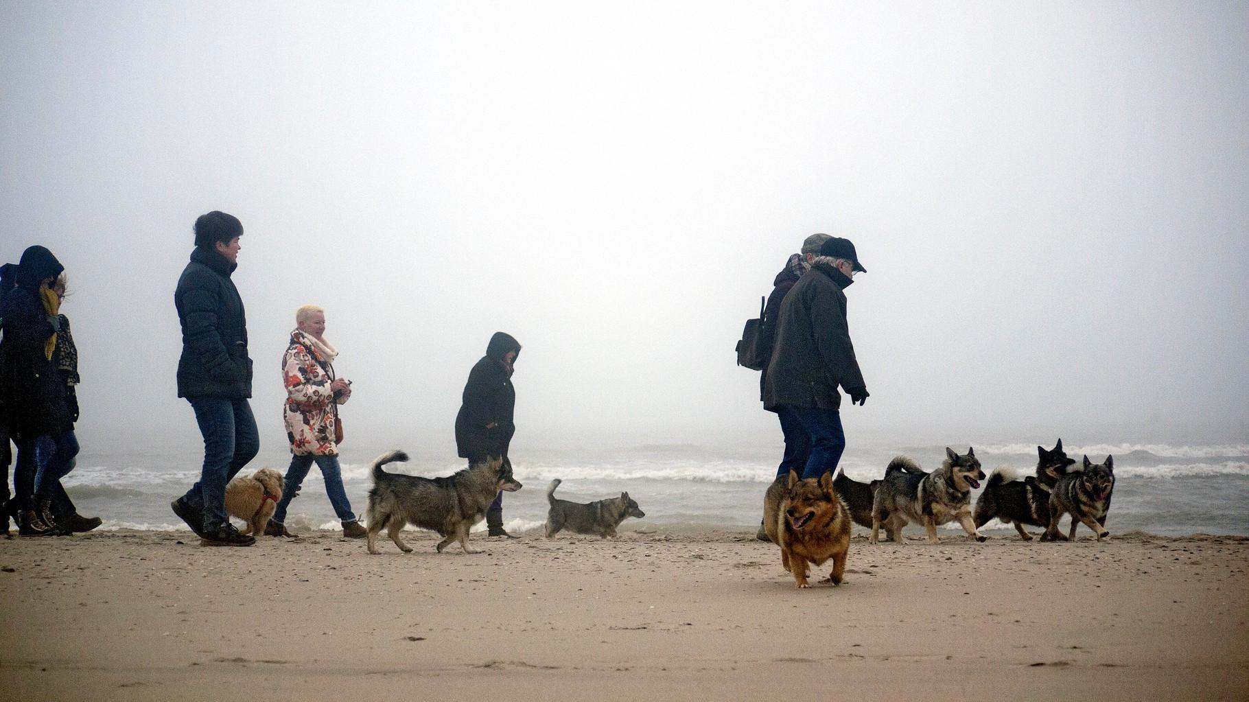Tijdens een wandeling, georganiseerd door de rasvereniging (VVN)