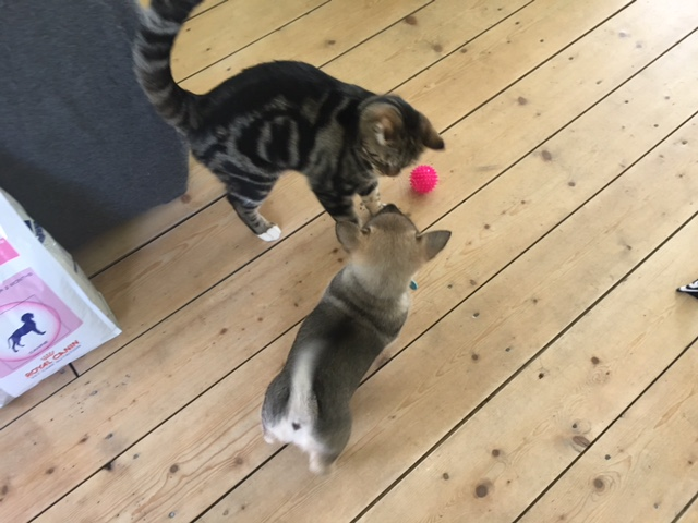 De eerste dag in zijn nieuwe huis: kennismaken met de poes! - Jacky meeting the cat at the first day in his new home. Foto: Tamara van Taanom